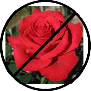 no rose